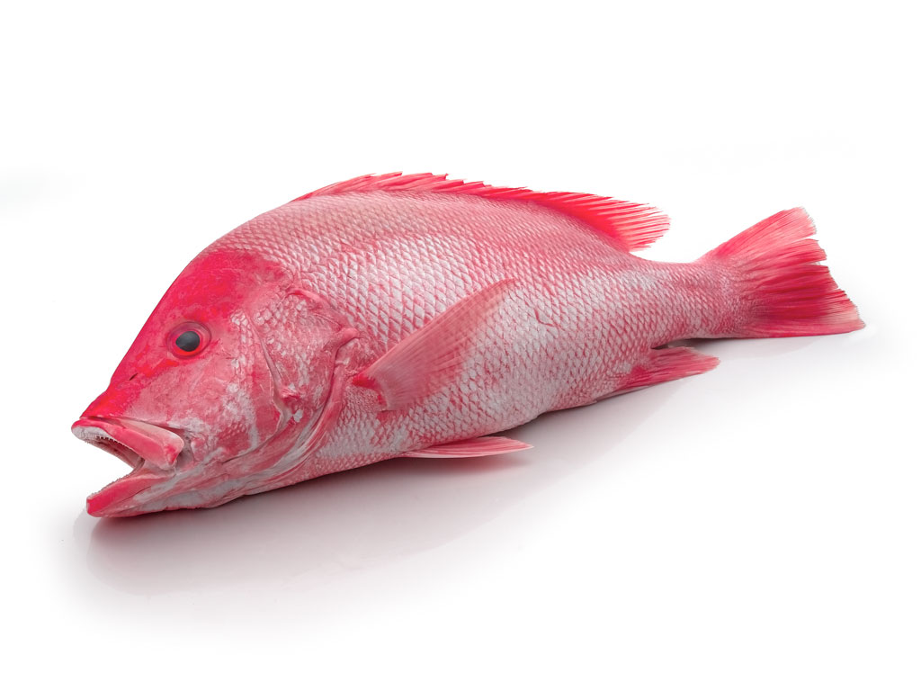 Different types of fish and how to cook them for Red snapper fishing