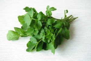 watercress lettuce salad