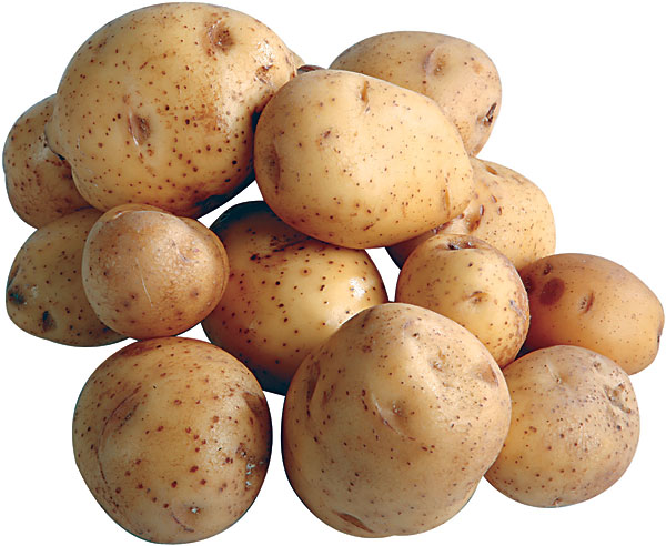 yukon gold potato is less yukon gold potatoes yukon gold potato bread ...