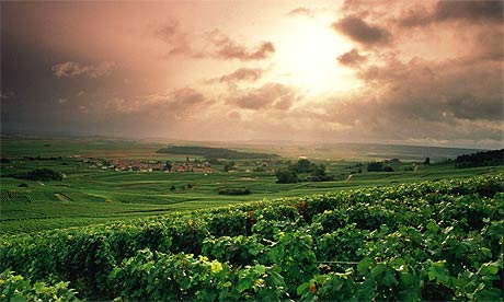 Wine types and varieties that you need to know for Champagne region in france